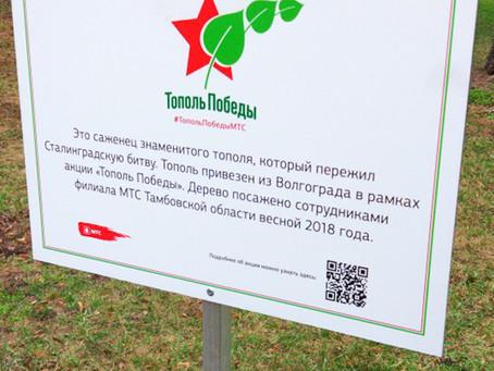 Участие в акции  «Тополь Победы»
