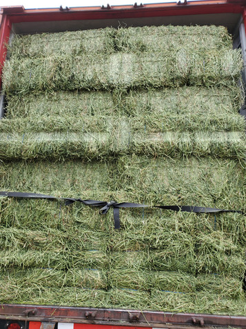 A Stack of  Bright Green 3 String Western Straight Alfalfa