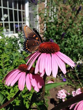 flower butterfly (1).jpg