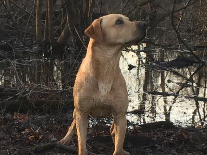 Hunting season 2017-18