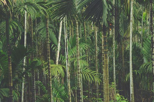 Forest%252520Trees_edited_edited_edited.