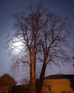 TreeSt.John'sCemetar#1F9A1A