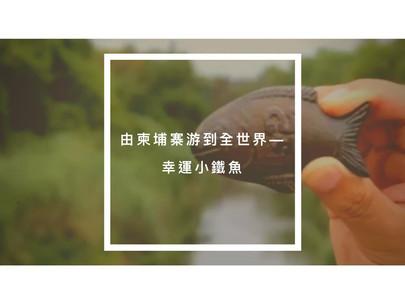 由柬埔寨游到全世界—幸運小鐵魚