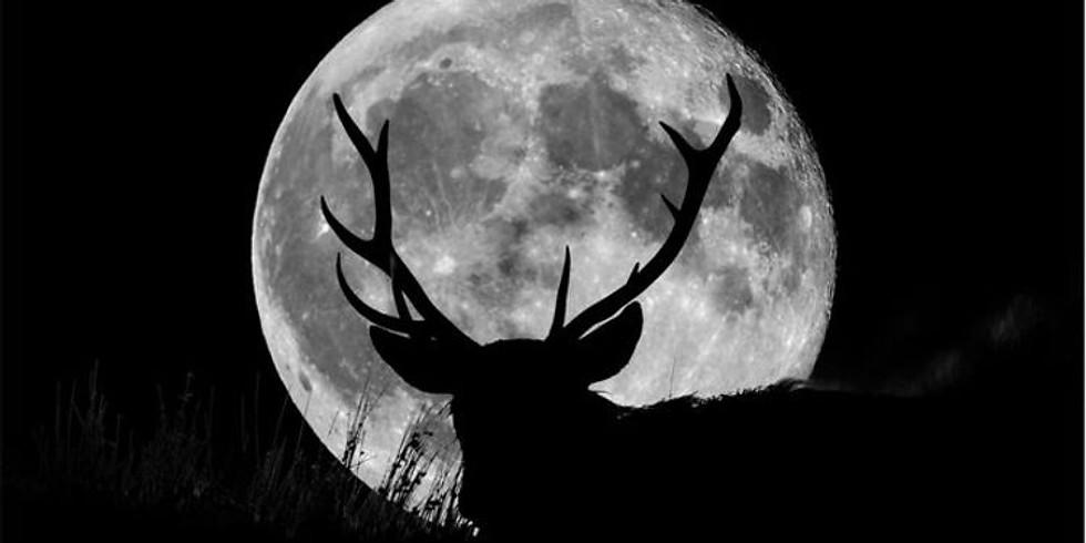 Buck Moon Paint Night on the beach