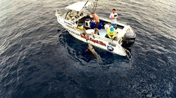 game fishing from the 6m hire boat