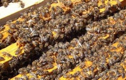 bees-486870_1920-300x225.jpg