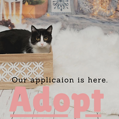 Our-applicaion-is-here.-300x300.png