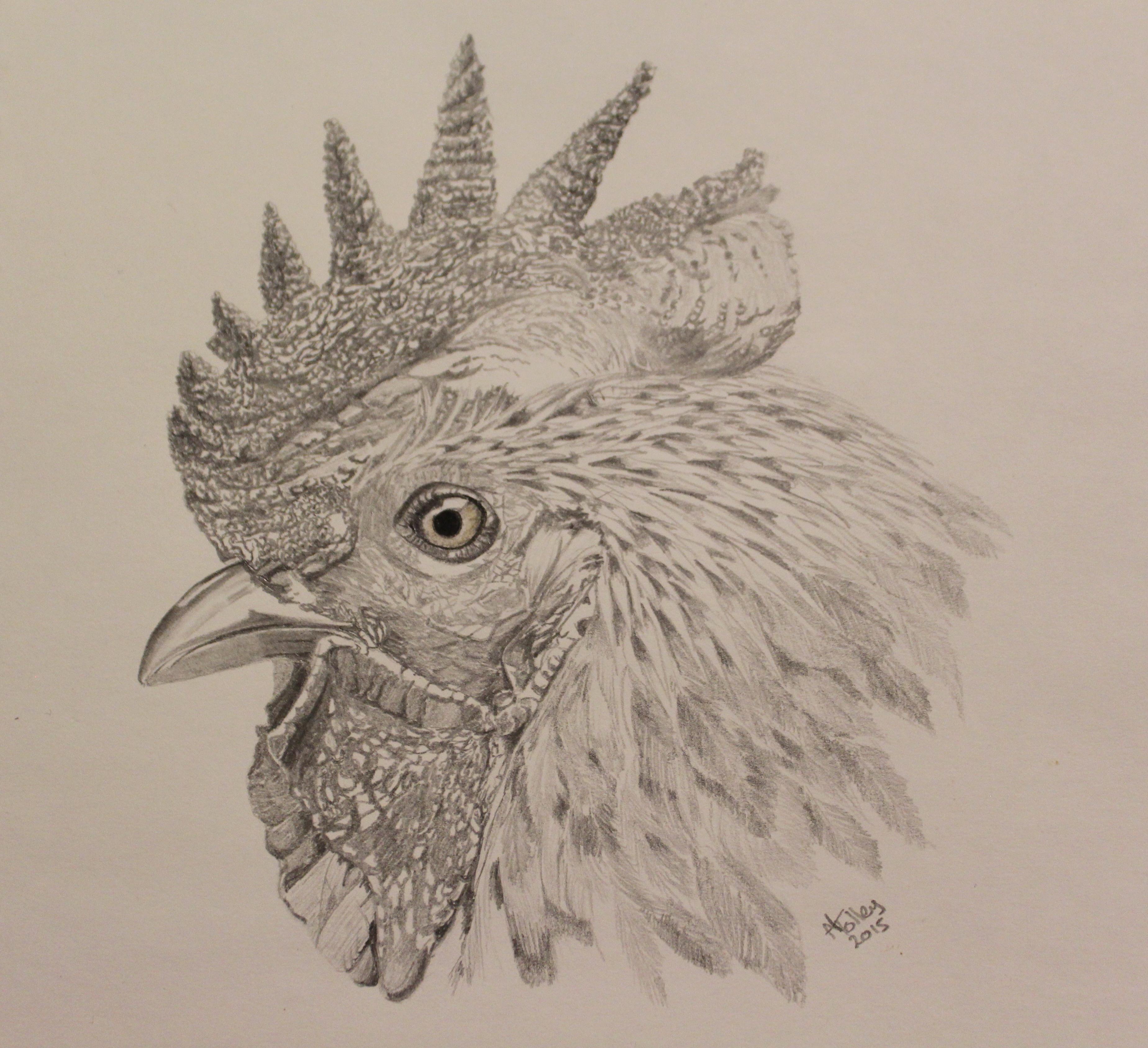 Rooster 02.02.15.jpg