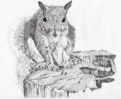 Squirrel 06.12.13.jpg