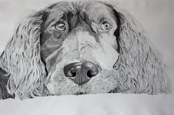 Shaun's dog. 7.24.12.jpg