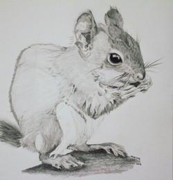 Baby Squirrel 10.15.18.jpg