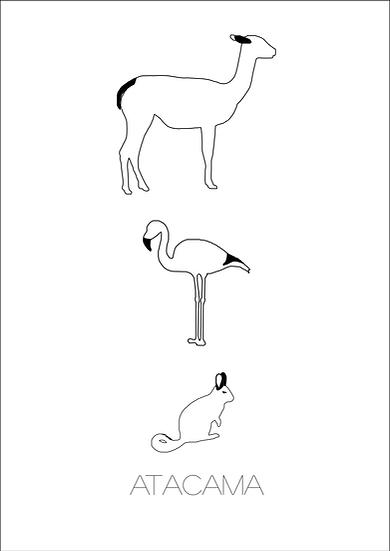 Poster Animais Atacama Preto