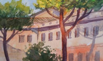 Vatican Pines