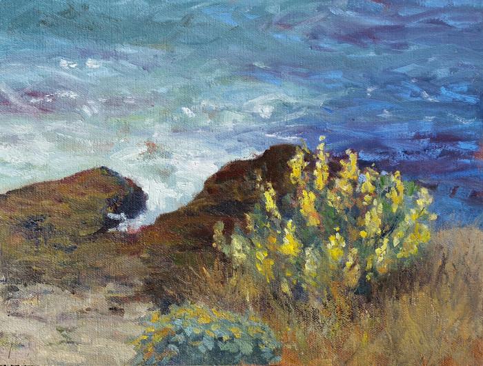 Yellow Lupine, West Cliff Santa Cruz