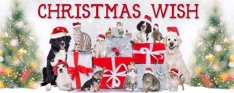 wifc-christmaswish-1500-1024x409_edited.