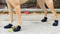 dog-boots cropped.jpg