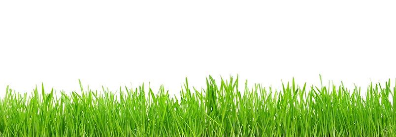 green-grass-isolated-white 980x340.jpg