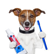 Dog with toothpaste and brush DP.jpg