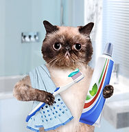 cat with toothpaste an brush.jpg