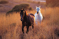 two-horses-at-sunset.jpg
