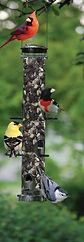 Three_birds_on_feeder.JPG