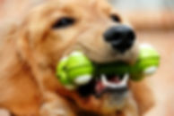dog_with_toy.jpg