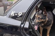 MTC K-9 Dog in car.jpg