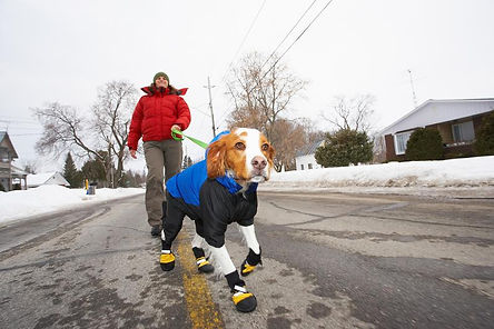 Dog with booties and coat in winter.jpg
