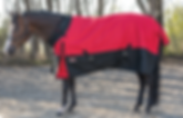 JT Turnout blanket on horse cropped.png