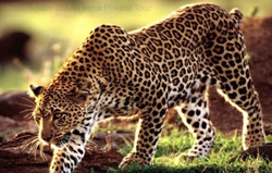 jaipur Rajasthan Wildlife Safari