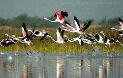 Rajasthan Wildlife Safari tour package ITI private tour