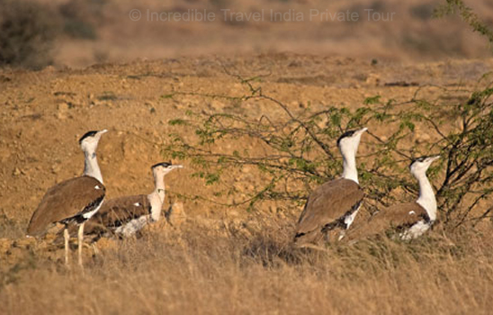 Rajasthan Wildlife Safari itinerary package