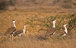 Rajasthan Wildlife Safari itinerary package