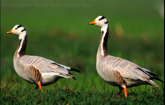 Rajasthan Wildlife Safari jaipur tour