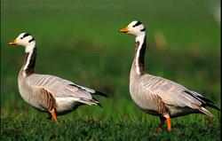 Rajasthan Wildlife Safari jaipur tour