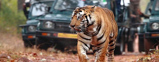 private day tours, jaipur private day tour, Samode day tour, Ranthambore day tour, Ajmer Pushkar day tour, incredible travel India day tours, Agra day tour package, day tour packages travels,