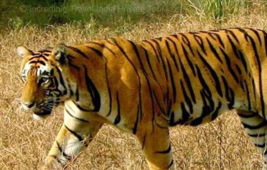 Rajasthan Wildlife Safari ranthambore package