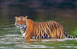 Rajasthan Wildlife Safari cheapest tour package