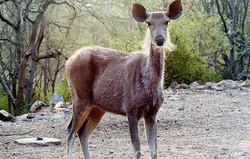 Rajasthan Wildlife Safari plans and tours