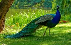 Rajasthan Wildlife Safari tour package