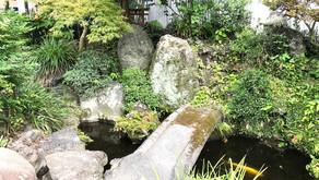 緑豊かな池のある中庭を・・・