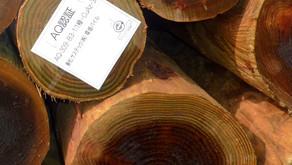 自然木を利用した環境にやさしい地盤改良工事