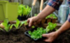 rndr-sprout-garden.jpg