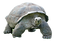 gray%20and%20black%20turtle_edited.png