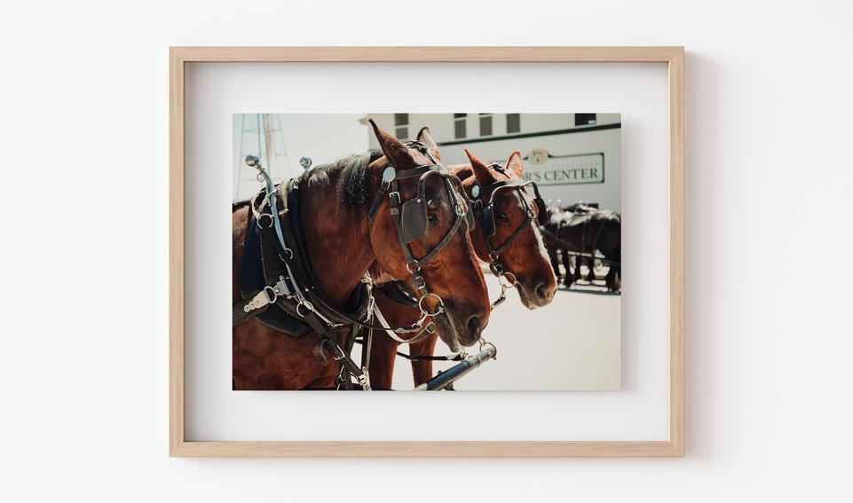 Horses of Mackinac
