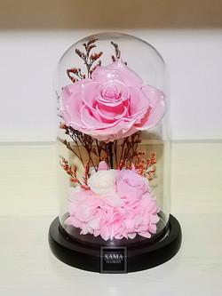 珍珠粉色玫瑰保鮮花