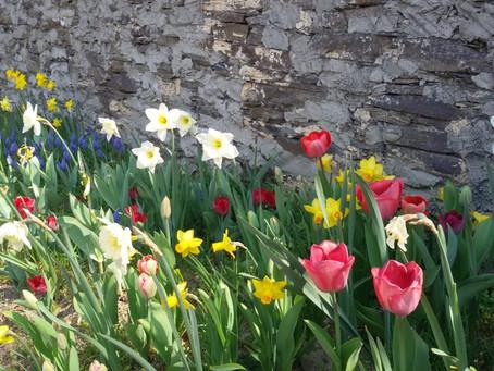 Blütenpracht im Schulgarten