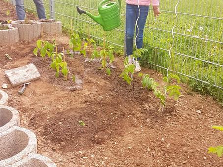 Die Garten AG startet ins Gemüsejahr!