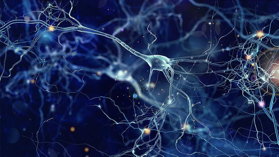 fs-cells-of-the-brain.jpg