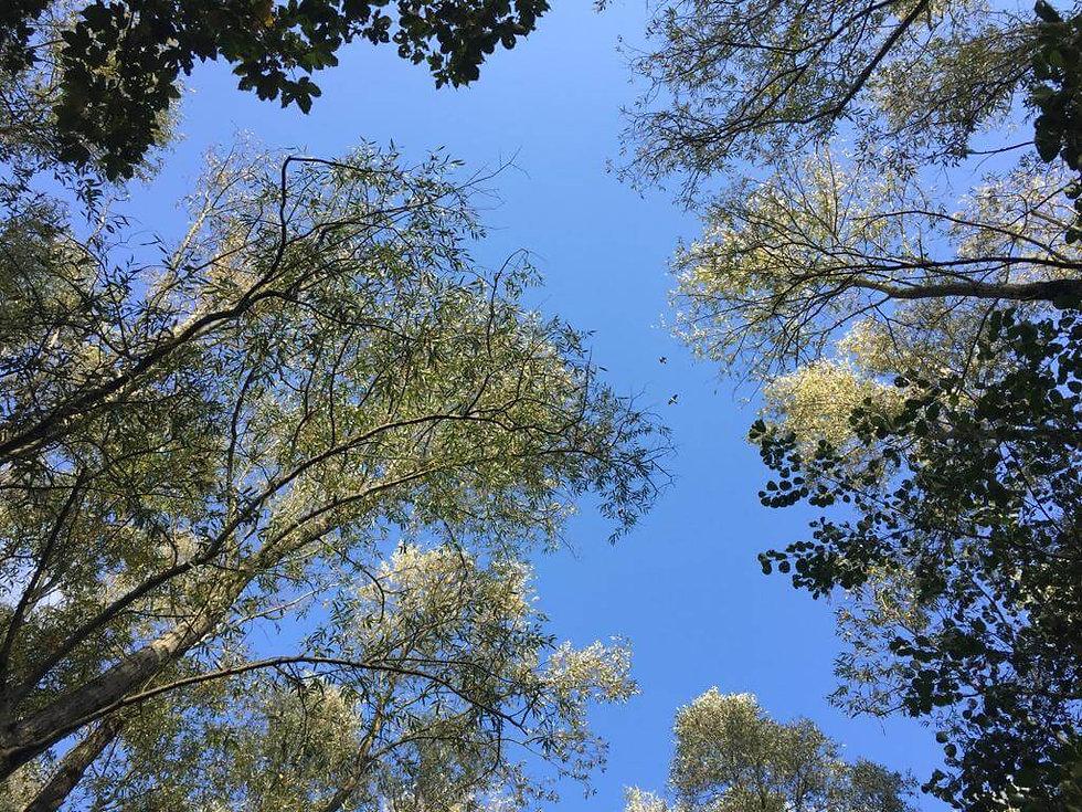 herfst in de bos tuin.jpg